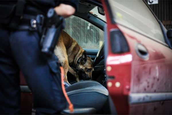 A photo of an officer searching a car with a dog
